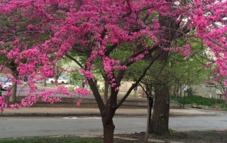 july-tree